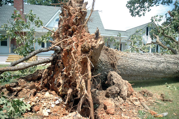 Storm uproots trees, but county sees little damage