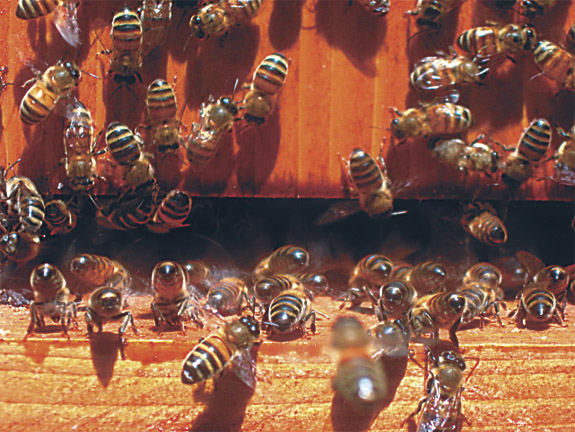 Beekeeping is easy and a way to keep in tune with nature