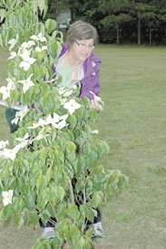 Franklinton honors long-time volunteer with memorial tree