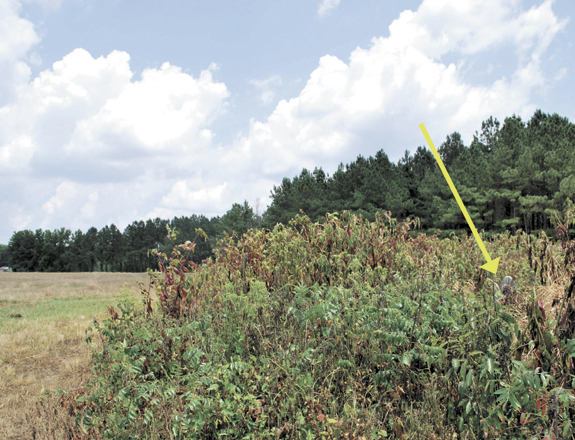 <i>Plan to move a grave digs up controversy</i>