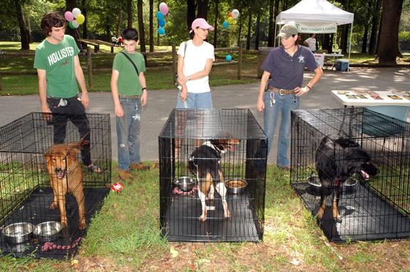 <i>Pet adoptions spiral upward!</i>