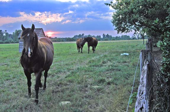 """Exploring Equine Farms"" annual tour coming Aug. 2"