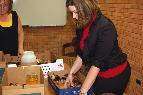 Chick Day at the Extension Office