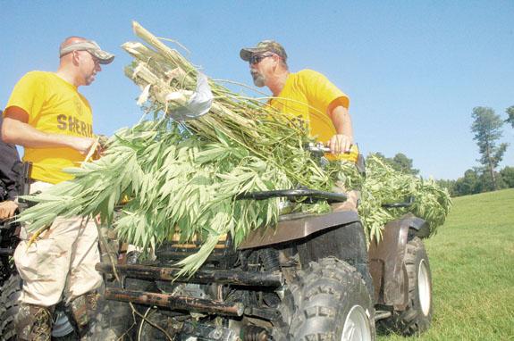 91 'pot' plants cut, seized in multiple raids
