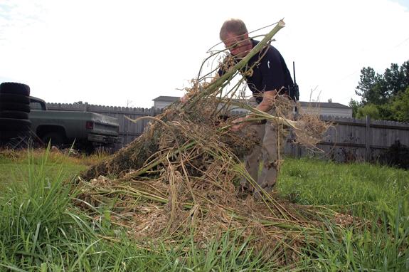 Sheriff's Office marijuana search nets dozens of plants, warrant
