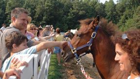 Not horsing around: enthusiasts ride out new ideas